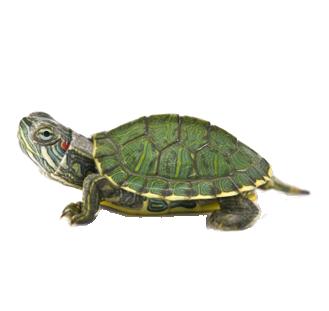 Turtle Team